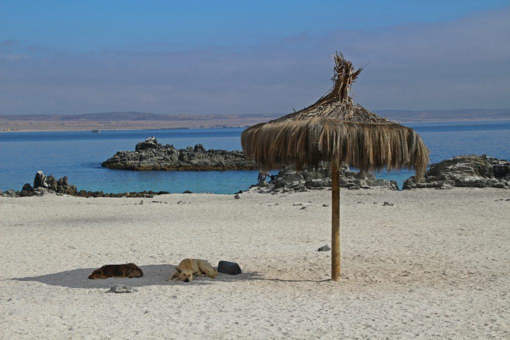Bahia Inglesa Pan de Azucar Chili plage sable blanc mer turquoise chien
