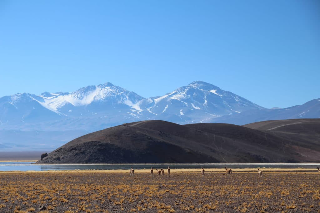 nevado tres cruces chili guanaco paysage insolite
