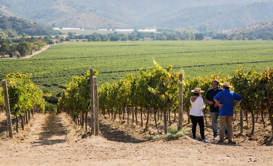 les vignes Matetic vallee casablanca Chili