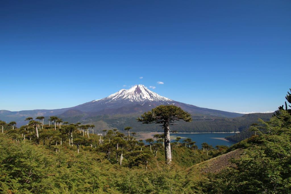 mirador araucaria lagune volcan llaima