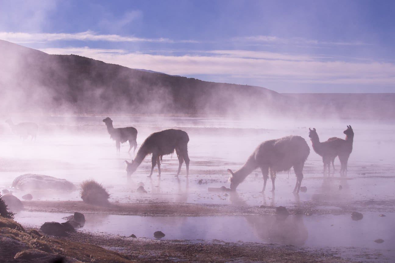 Geysers El tatio Atacama