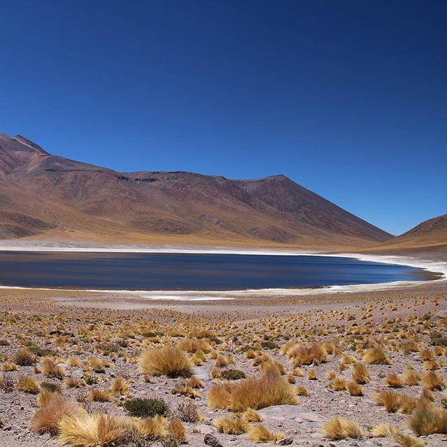 Lagunes altiplaniques miscanti et miñiques altiplano chili desert atacama