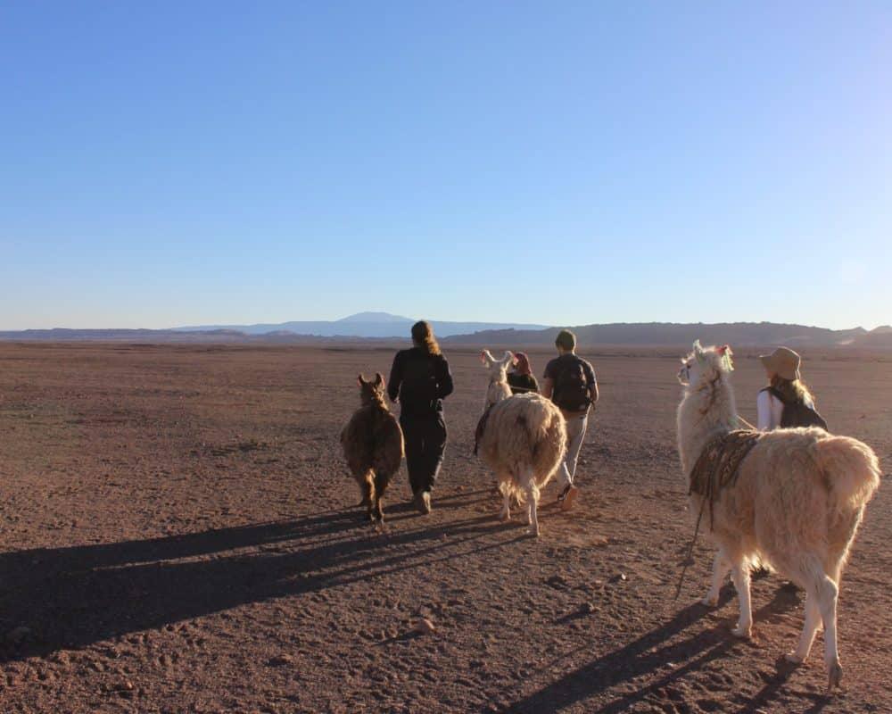balade avec des lamas chili caravane ancestrale desert atacama