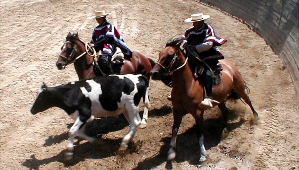 media luna tradition chili rodeo chilien huaso