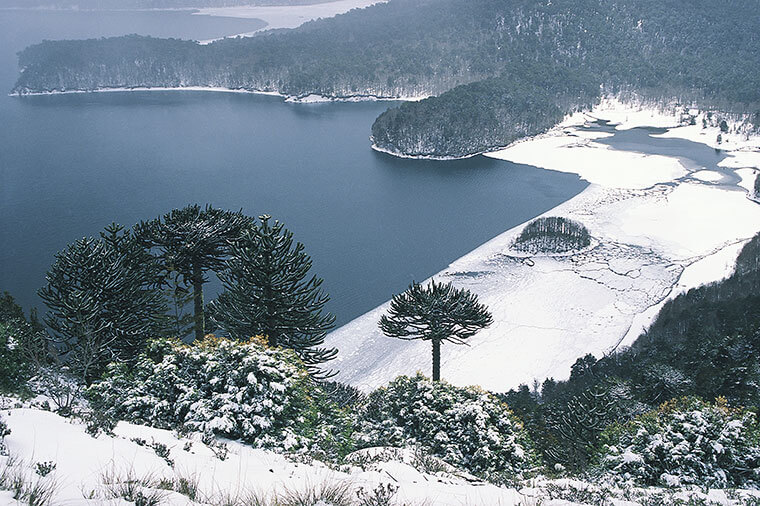 parc conguillio hiver neige araucanie chili