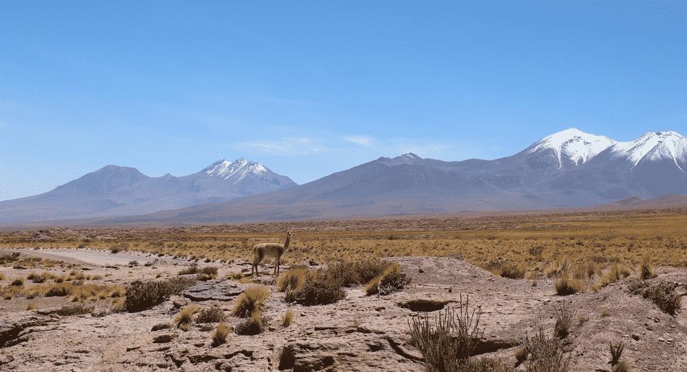 guanaco sur fond de volcan lagune altiplaniques chili atacama désert