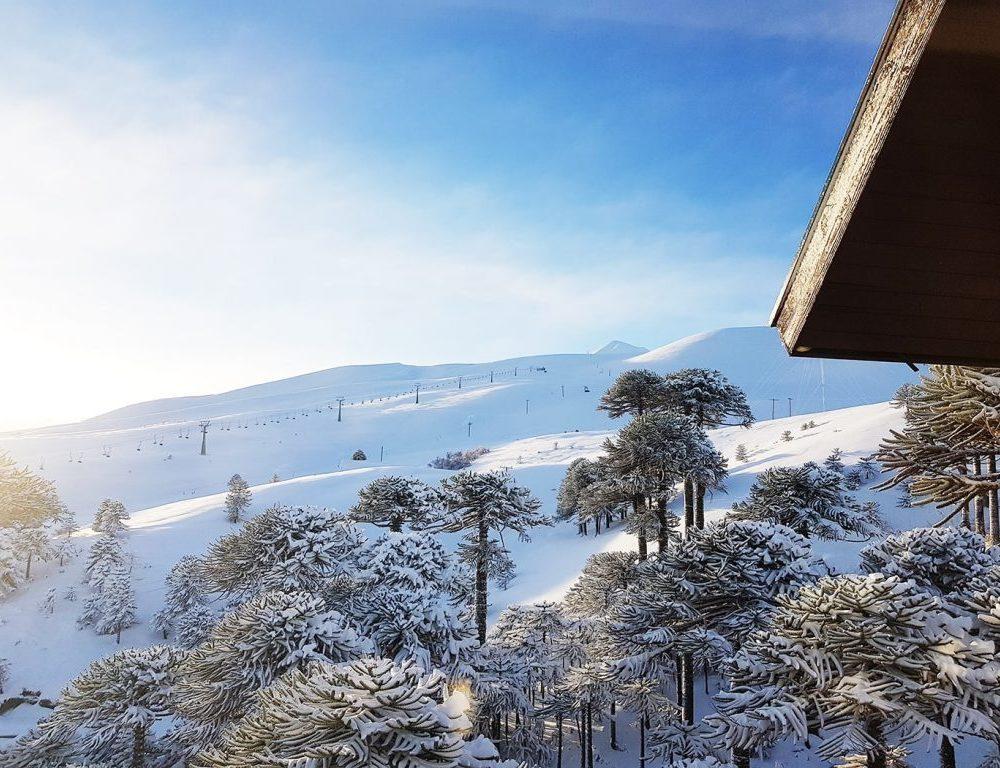 Las Araucarias Conguillio ski