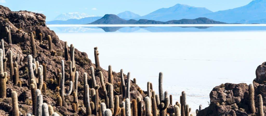 Salar d'Uyuni cactus bolivie