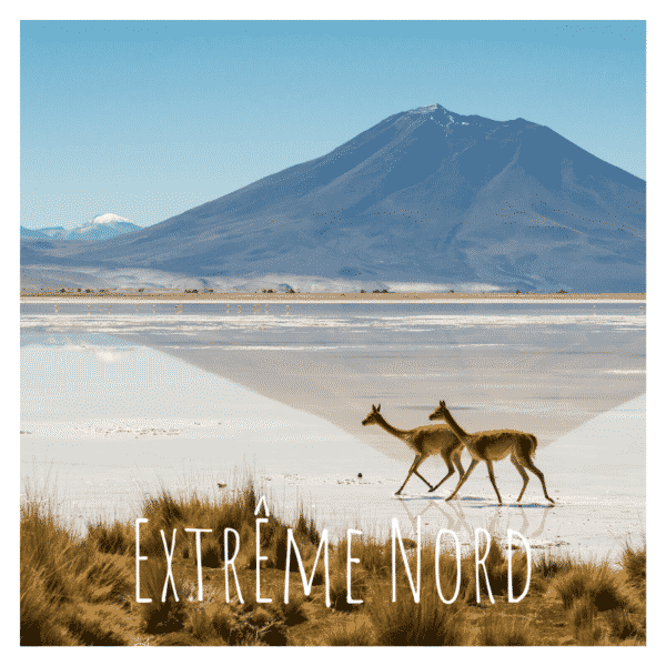 Extreme nord chili lama destination travelcoachchile