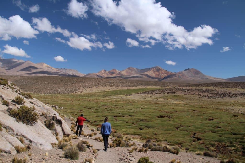randonnee pedestre dans l'altiplano dans un bofedal à l'extrême nord au chili