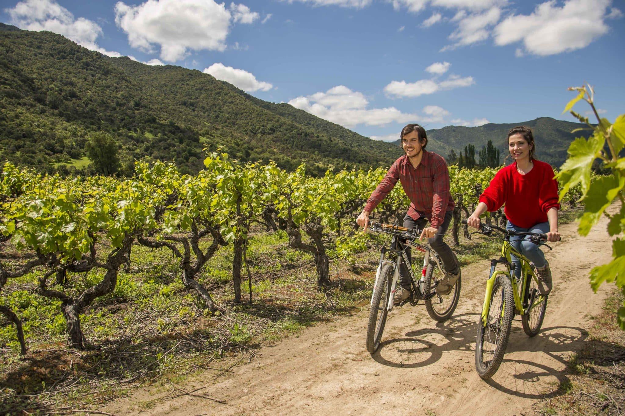 2 personnes à vélo au Chili dans la région del Maule entre les vignes