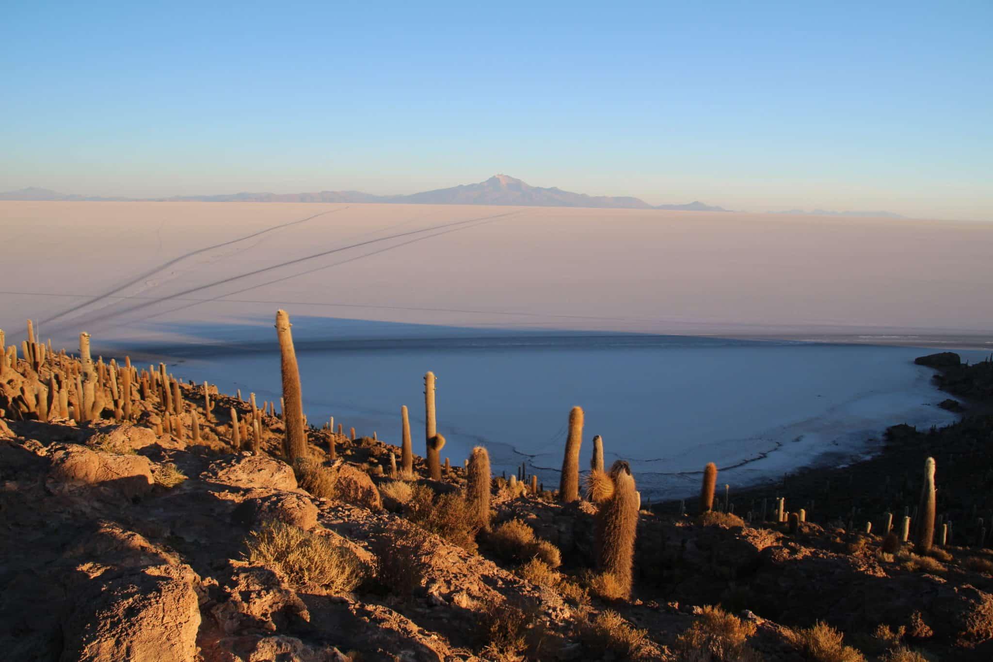 Ile aux cactus Uyuni Salar Bolivie