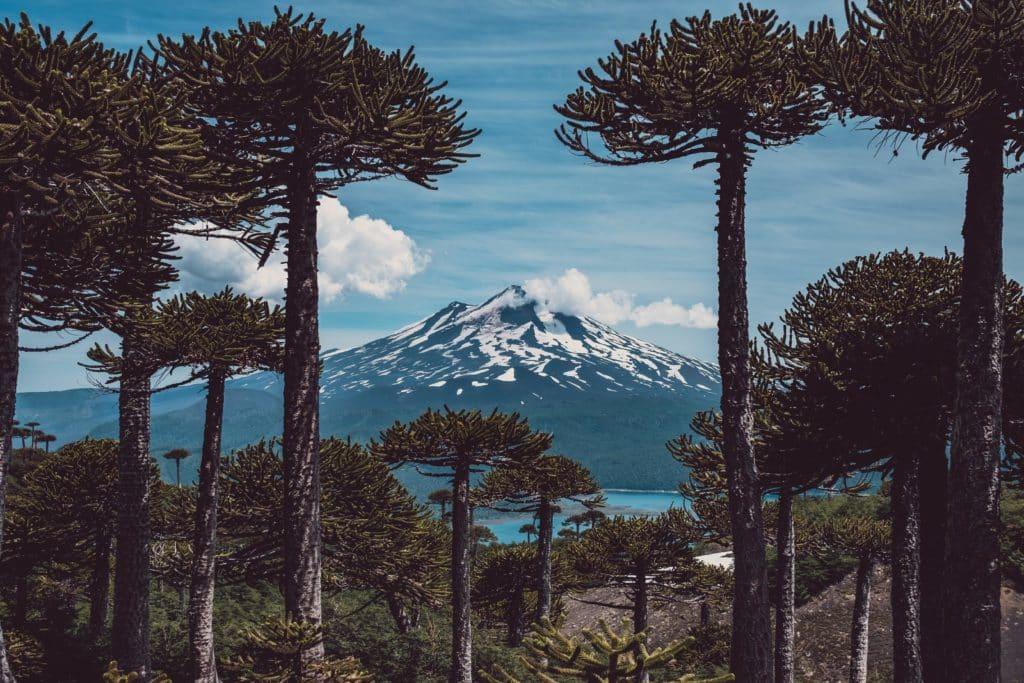 parc conguillo chili foret d araucaria sur fond de lac et volcan enneigé