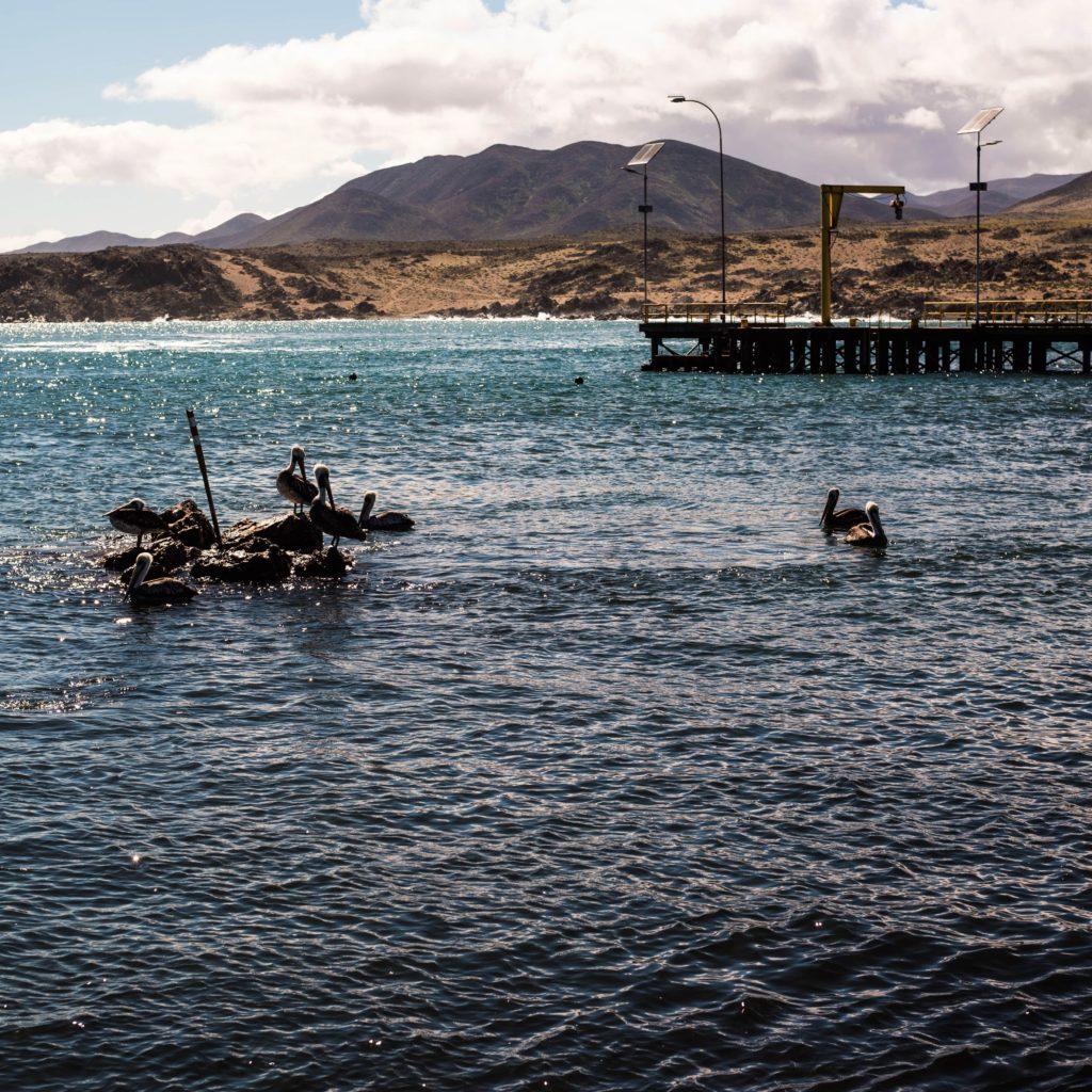 baie de viña del mar avec des pélicans au chili