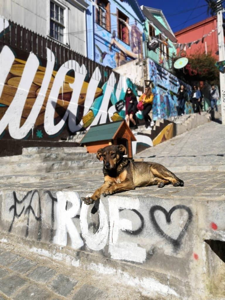 chien pensif dans les rues de Valparaiso