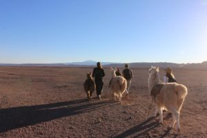 Ancestral hike with llamas