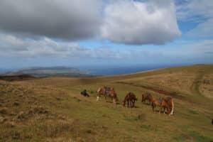 Easter island equestrian hike
