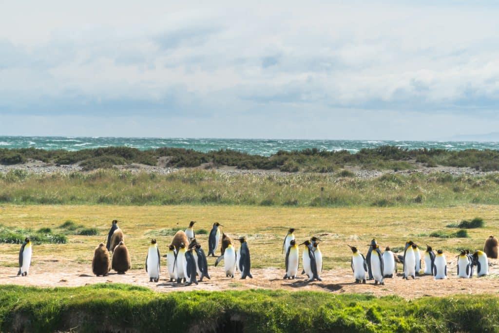 manchots-pingouins-chili-argentine-animaux