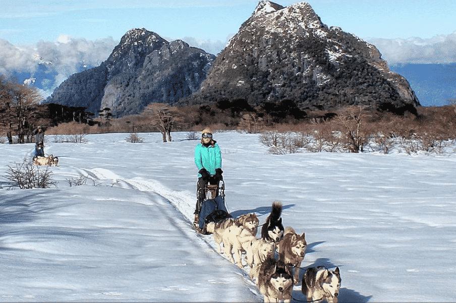 husky chiens de traineaux chili neige hiver