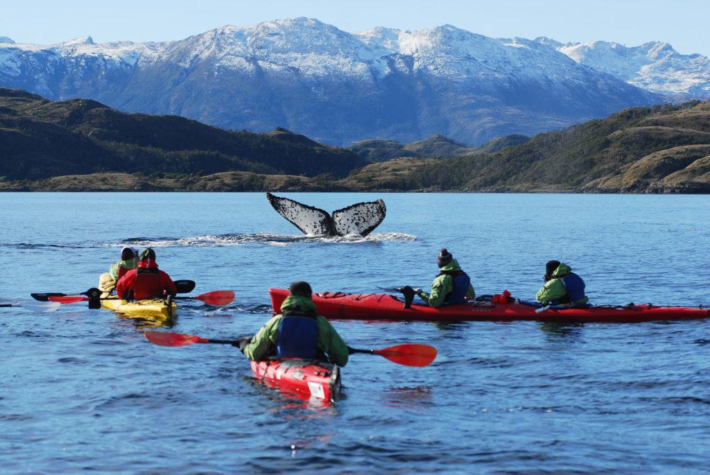 kayak baleine patagonie