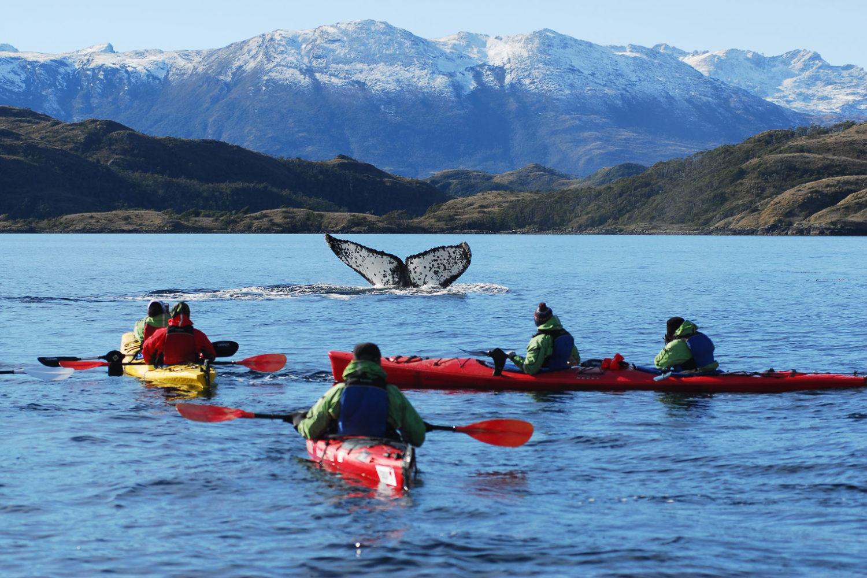 patagonia whale kayak