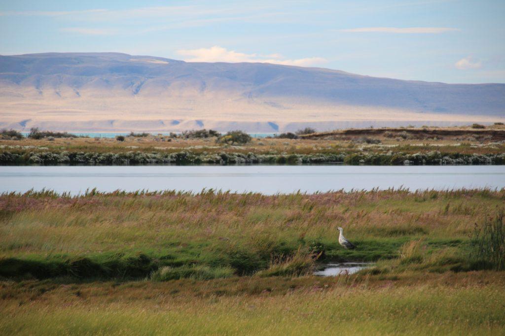 laguna de nimez el calafate patagonie argentine