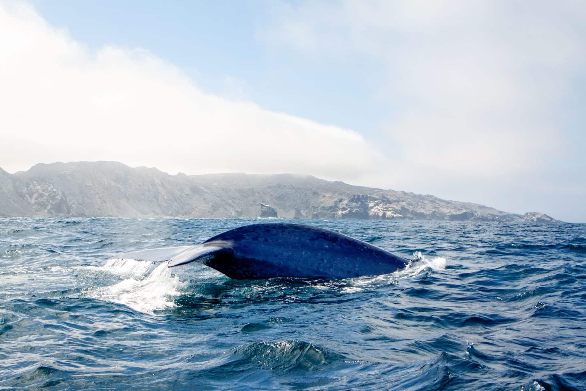 baleine nord chili pas cher