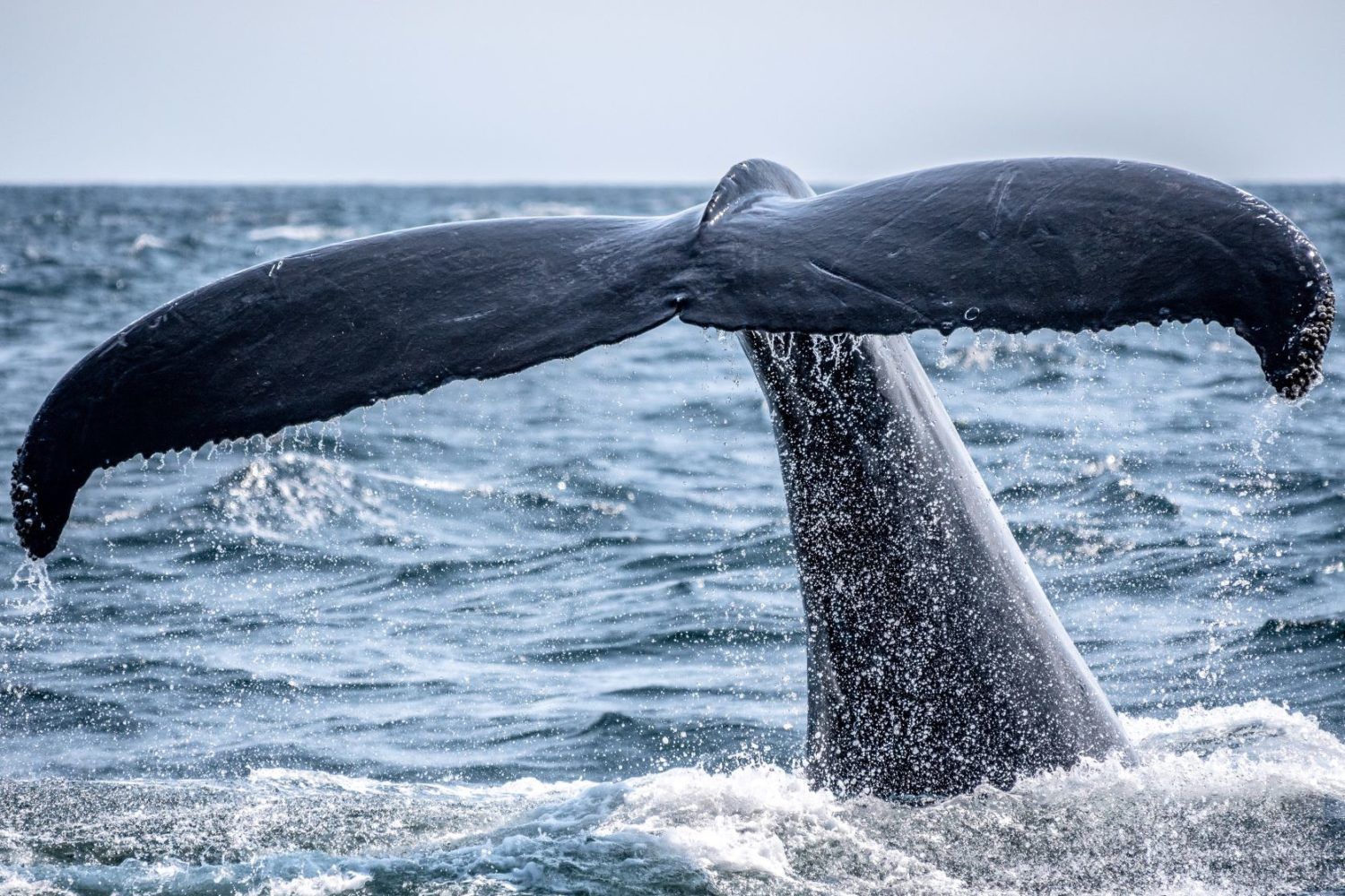 Whale watching in Patagonia Chile