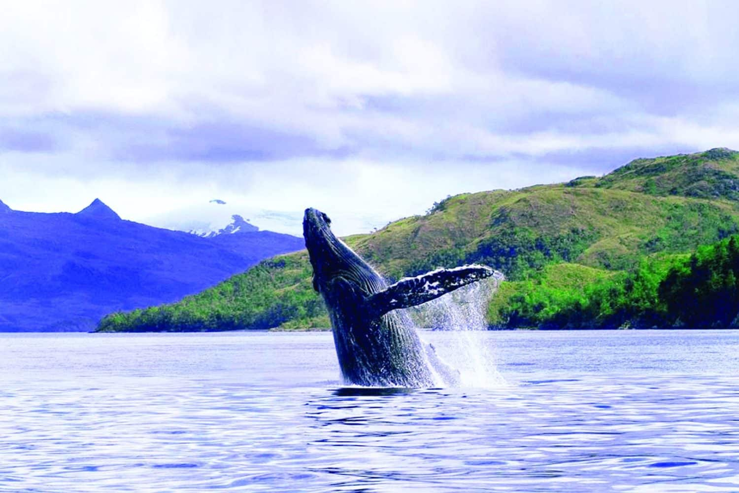 Whale watching tour in Patagonia solo expediciones