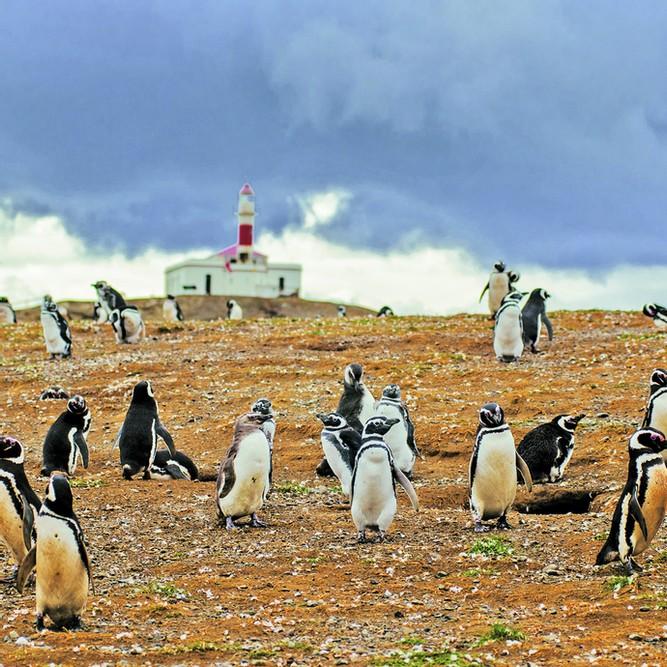 manchots solo expediciones penguins