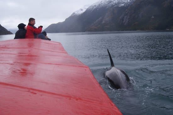 Whale watching tour in Patagonia